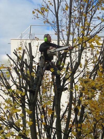 élagage et abattage d'arbres