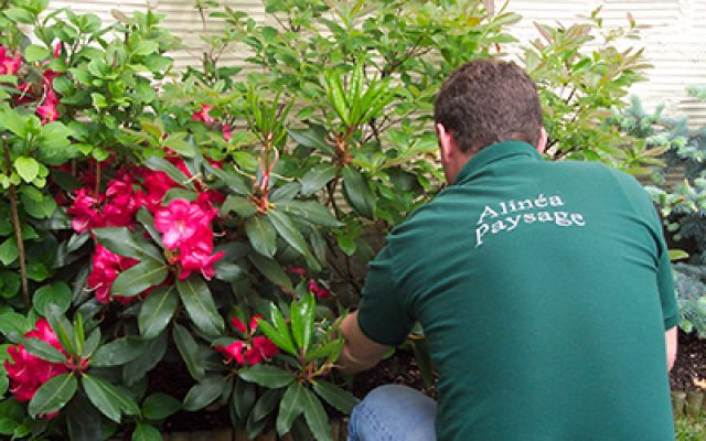 Installation de jardinières pelouse